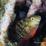 Parrotfish NatGeo