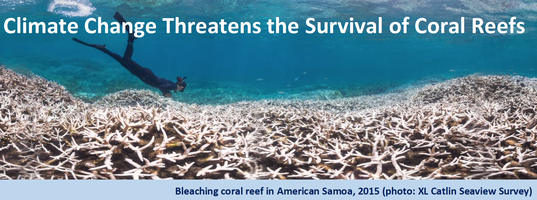 climate change coral bleaching and the Climate change to affect florida coral reefs sooner than thought bleaching outbreaks could be widespread by 2030.