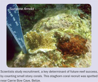 Scientist Study Recruitment On Stony Coral